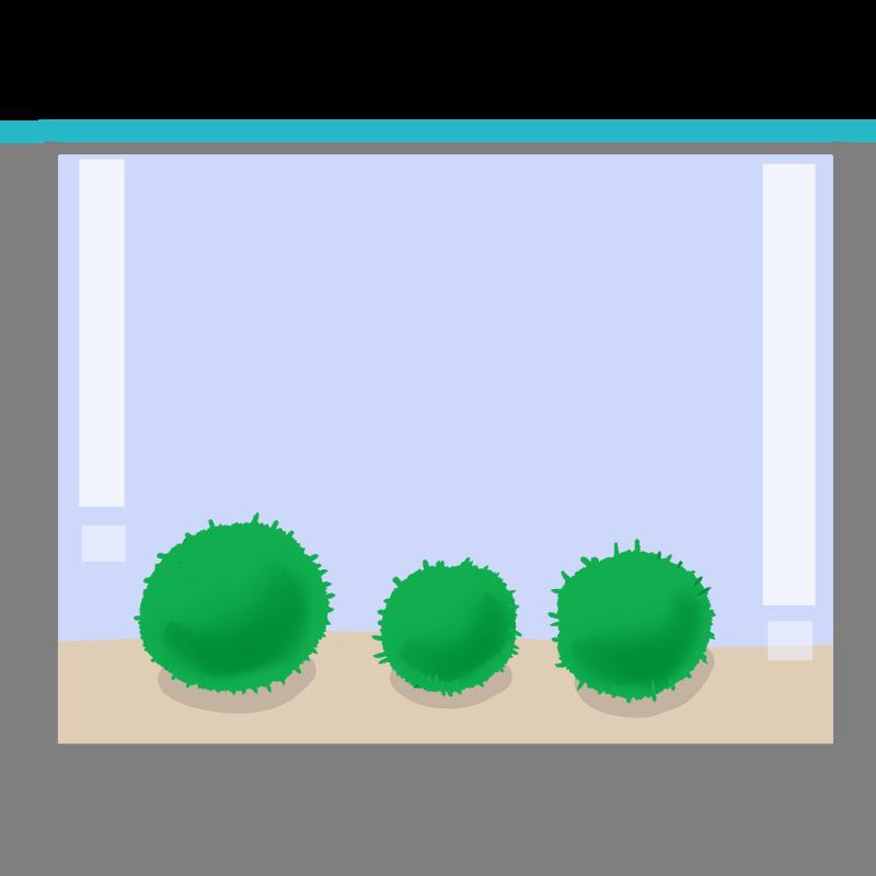 水槽に入ったマリモのイラスト