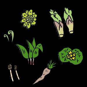 春の山菜のイラスト