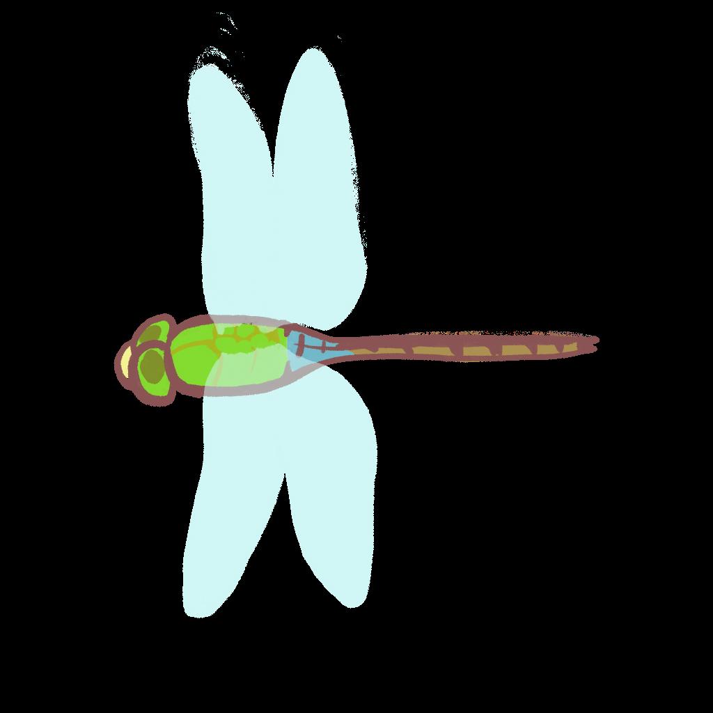 ギンヤンマのイラスト
