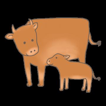ジャージ牛の親子のイラスト