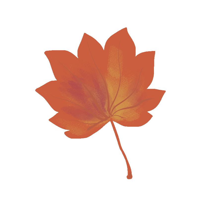ハウチワカエデの紅葉のイラスト