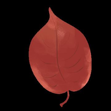 エゾヤマザクラの紅葉のイラスト