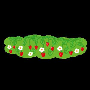 いちご畑のイラスト