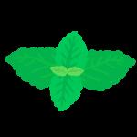 ミントの葉っぱのイラスト