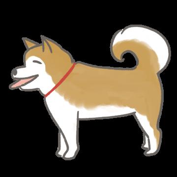 秋田犬のイラスト
